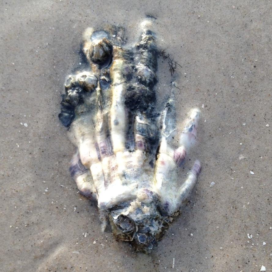 Hand_k